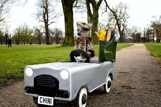 CHINI PROJECT : Irina Werning - Photographer #chini #project #irina #color #werning #harrods #photography #car #funny #dog