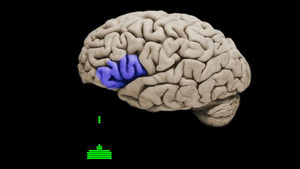 Scientists Prove Once Again That Playing Violent Video Games Alters Young Men's Brains #brain