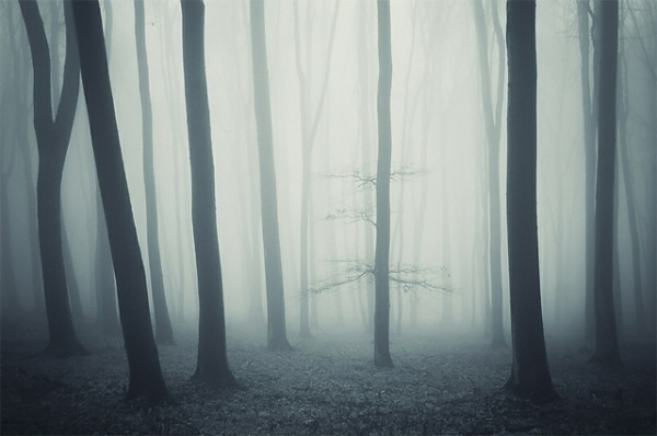 Colossal | An art and design blog. #forest #photography #trees
