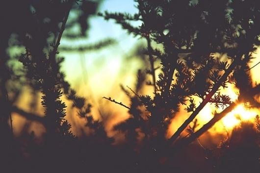 NAVIS PHOTOBLOG #sunset #photography #silhouette #plant