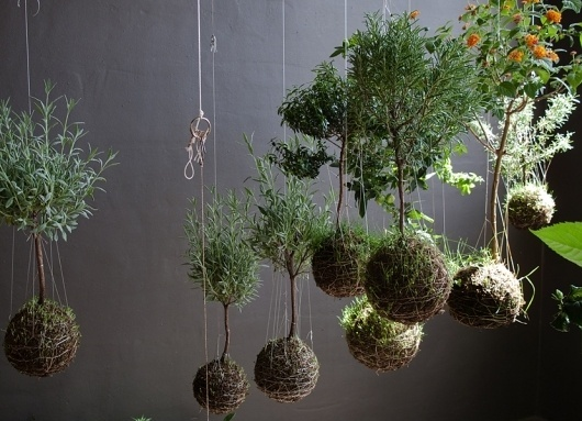 slide to the right -> : string gardens #flying #trees #greens