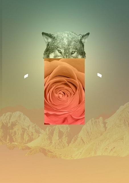 b35ff635c15998c4c11e836cff016108_L.jpg (453×640) #abstract #rose #photoshop #wolf #collage
