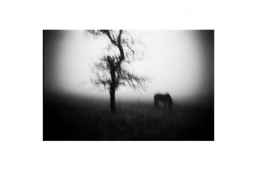 Jib Peter - Auteur Photographe - Saone Et Loire #horse #tree