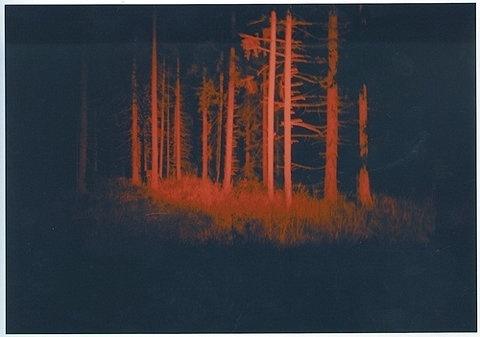 FFFFOUND! | Razz. #forest #red