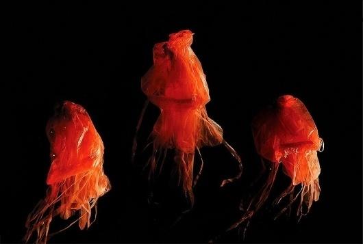 Jellyfish | COÖP #fashion #photography #design #styling