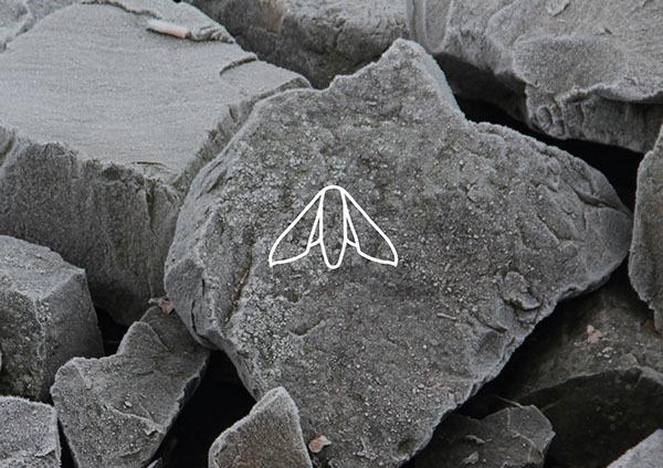 Sign on Behance #moth #drawing #illustration
