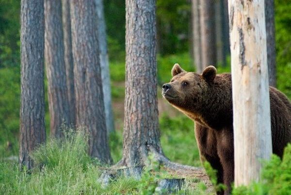 Animals Photography by Kimmo Savolainen #inspiration #photography #animal