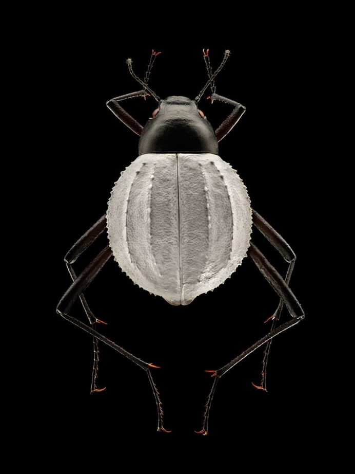 Microsculpture: Insect Portraits Under The Microscope by Levon Biss