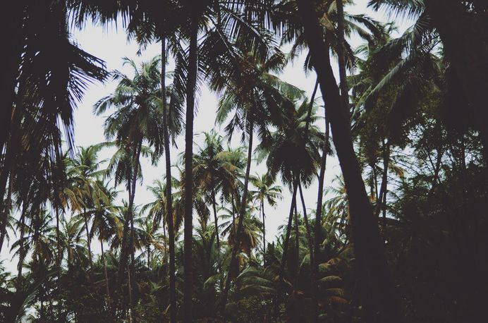A dark forest of palm trees and tropical plants with a bright blue sky