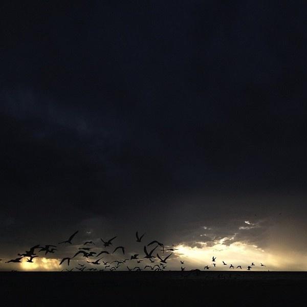 Birds. #clouds #shade #rockwell #florida #birds #james #rain #sunset #light #shadow