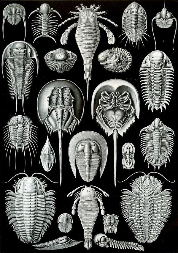 Microscopic – Rare Book 2 #vintage