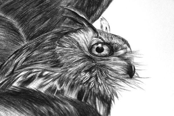 Deep forest by Lara Bispinck, via Behance #biro #owl #drawing #illustration #realistic #forest #animal