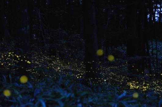 Glowing Trails of Light: Light Painting With Fireflies   Jeannie Huang #light #painting #landscape