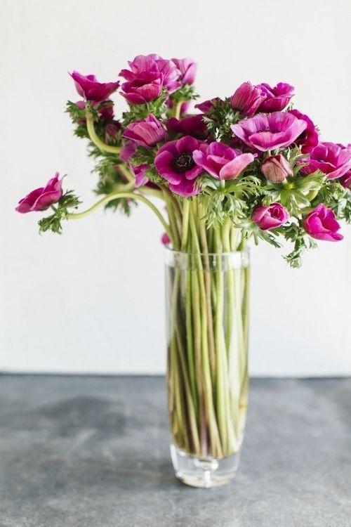 Likes   Tumblr #flowers
