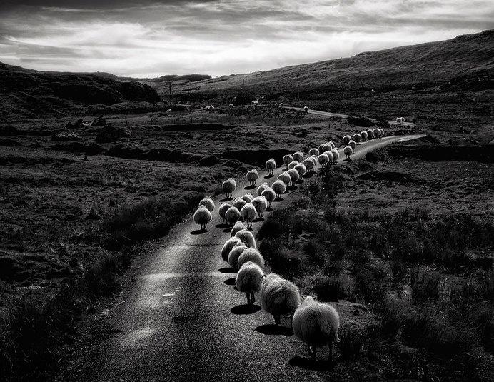 sheep-herds-around-the-world-2 #photo