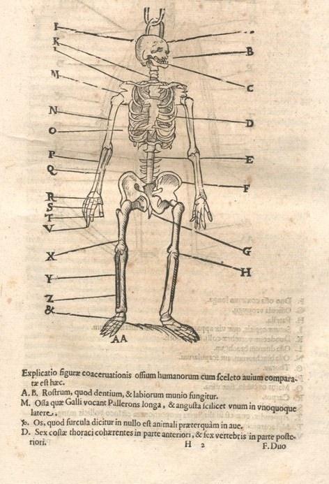 000097 #naturalism #aldrovandi #illustration #latin #ulisse #monster #drawing