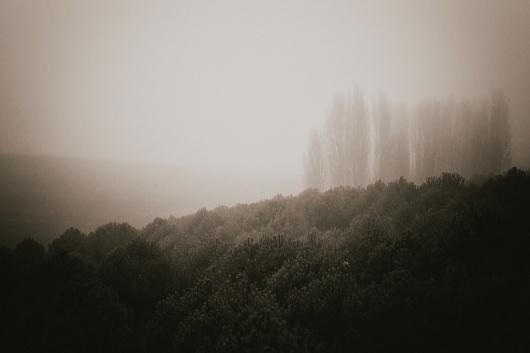 Nº 0038 #trees