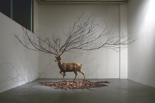 All sizes | Untitled 300 X 300 X 300 (inch) Deer Taxidermy, Branch, Leaves. | Flickr - Photo Sharing! #taxidermy #deer #branch #tree #leaves