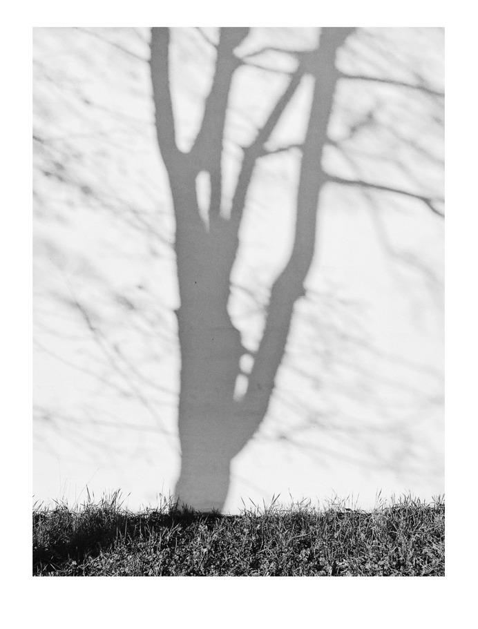 #tree PHOTOGRAPHIE © [ catrin mackowski ]
