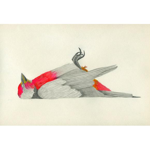 Lisa Congdon Art + Illustration » mort #illustration