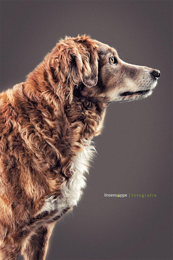 Elegant Dog Portraits Photography by Daniel Sadlowski #Animals #dogs #photography #cuteDog