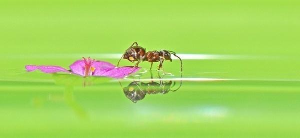 Macro Photography by Robert Trevis-Smith #inspiration #photography #macro