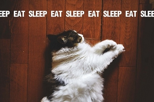 brown 3 by ~denizsabuncu on deviantART #text #photo #sleep #eat #cat