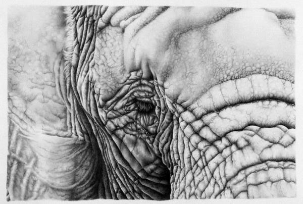 30 Hyper Realistic Pencil Drawings by Ileana Hunter #wise #drawing #elephant #eye #illustration #pencil #sketch