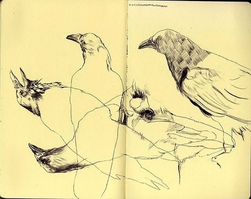 Donny Nguyen - BOOOOOOOM! - CREATE * INSPIRE * COMMUNITY * ART * DESIGN * MUSIC * FILM * PHOTO * PROJECTS #sketchbook #donny #bird #nguyen #crow #sketch