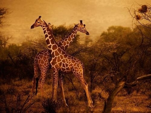 Best of February 2012 from National Geographic | Professional Photography Blog #photography #animal #nature