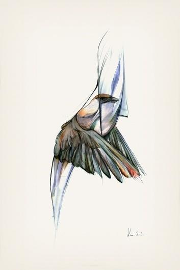 The Vanishing Bird - Kareena Zerefos #birds #illustration #graphite