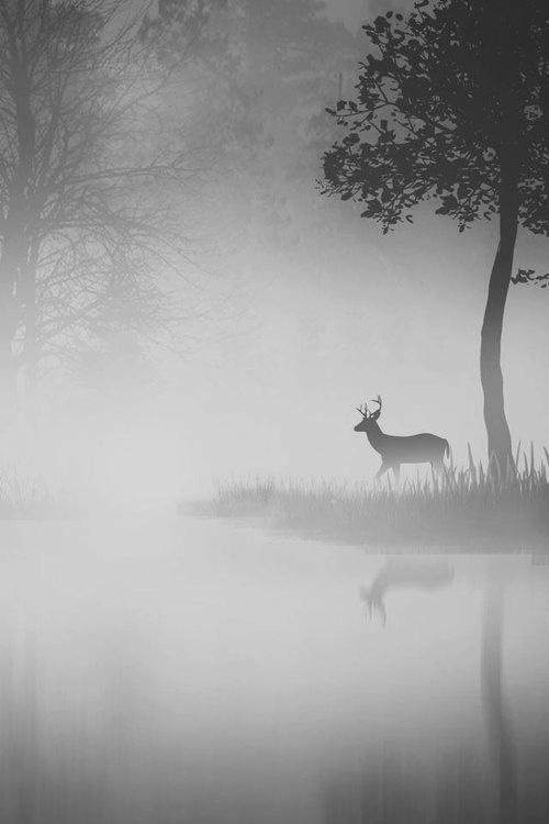 Beautiful Stag #beauty #deer #white #fog #cold #black #calm #photography #and #winter