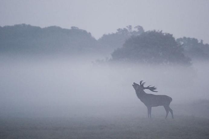 Stunning Red Deer in Richmond Park