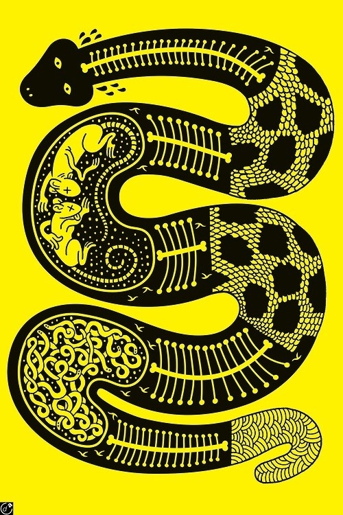 Designersgotoheaven.com X ray snake by Serge Seidlitz #poster #snake