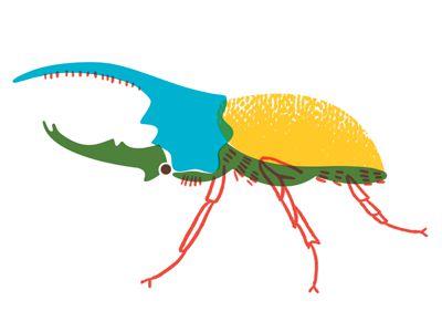 Herculese beetle