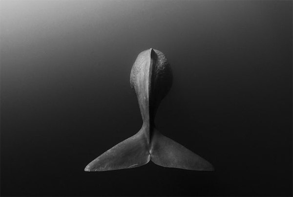 5 Photo by Shane Gross #photo #tail #underwater #fin