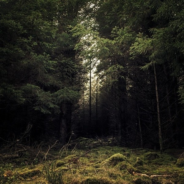 Wicklow Forest, Ireland #instagram #wood #photography #nature #beautiful #forest