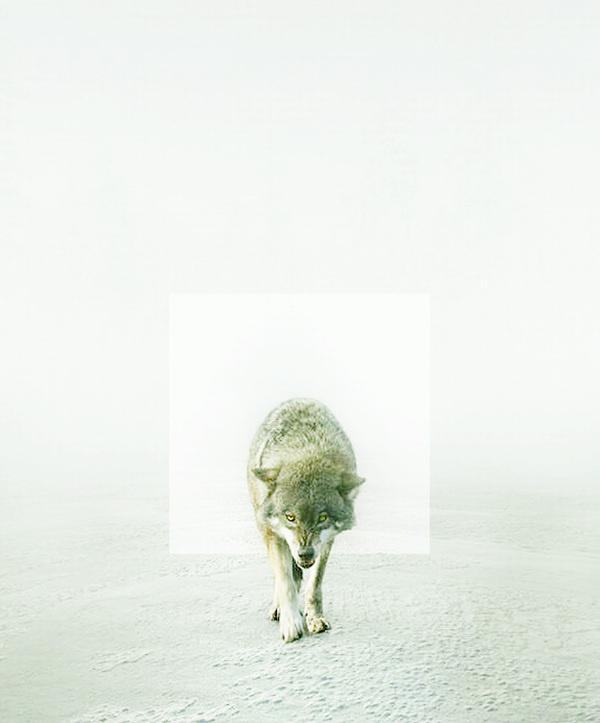 RK Design #wolves #wolf