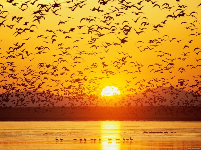 Flying Birds at Sunset
