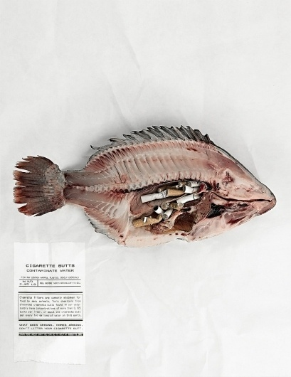 NoButts.org, Anti-Cigarette Butt Pollution Campaign: Tilapia | Ads of the World™ #shock #nobutts #jasonperez #jason #fish #advertising #perez #unt #student