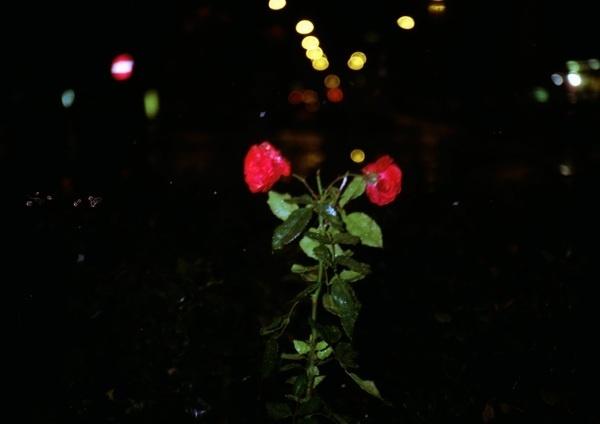 Random Vienna   Triangular Love. #red #plants #roses #night #triangle #photography #flower #dark
