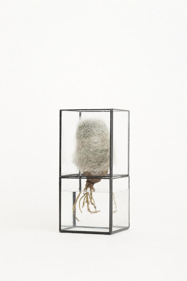 Hydro 100:80 by 10¹² TERRA #minimalist #terrarium #design
