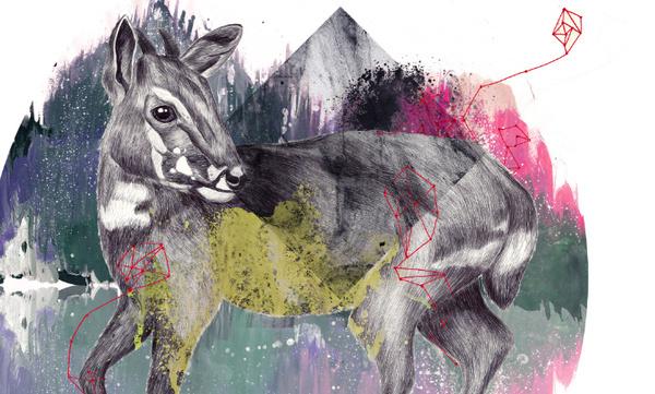 BEHIND THE UNKNOWN on Behance #silkscreen #calendar #illustration #realistic #watercolor #animal #saola