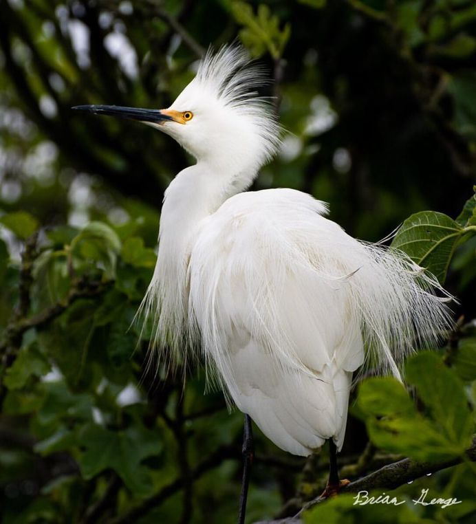 #your_best_birds: Beautiful Birds Photography by Brian Genge