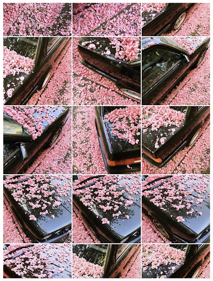 #car #flower #nelkenstr. #nippes PHOTOGRAPHIE © [ catrin mackowski ]