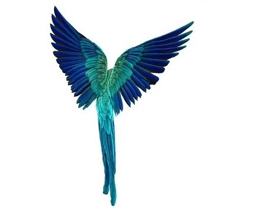 Andrew Zuckerman's Bird Photography – Photography inspiration on MONOmoda #colorful #photography #bird