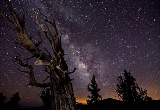 TimeScapes EPK: Electronic Press Kit #lowe #tree #astronomy #timescapes #tom #stars #stump