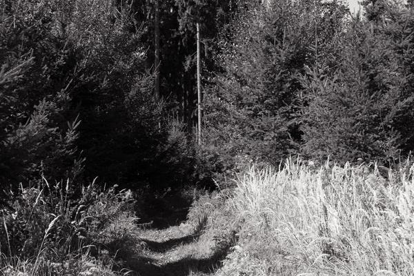 Zoomen Foto #forest