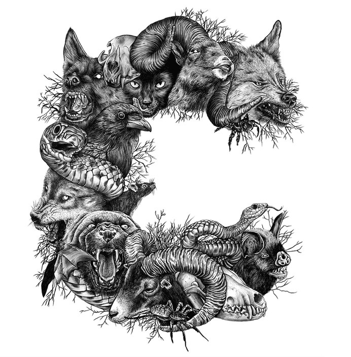 WILD THING #white #puma #black #pig #snake #letter #illustration #wolf #and #animals #sheep #drawing #sketch
