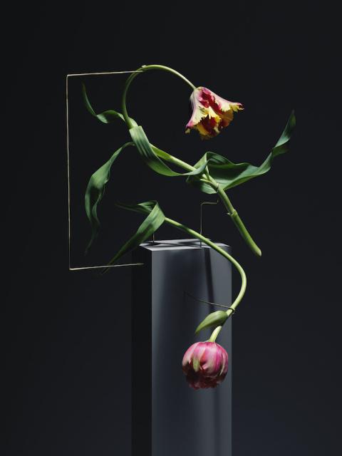 Carl Kleiner   PICDIT #flower #photo #photography